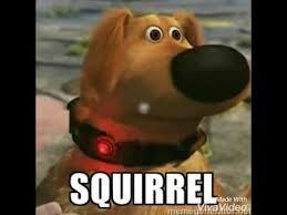 Squirrel Meme - lots of squirrel memes youtube