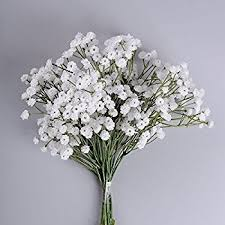 babys breath dried baby s breath flower dried gypsophila dried