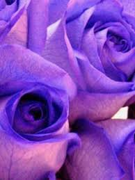 purple roses for sale purple flowers for sale lavendar flowers flower explosion