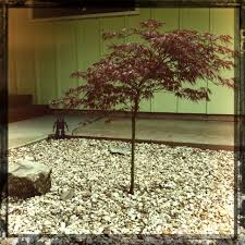 Japanese Rock Gardens Pictures by The Japanese Maple Mid Century Monster