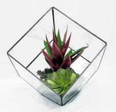 faux mini succulent in square glass vase