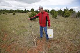 Oklahoma vegetaion images Langston researchers use goats in vegetation management study jpg