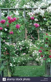 Garden Trellis Archway Rose Garden Trellis Arch Mannington Hall Stock Photo Royalty Free