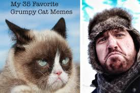Tired Cat Meme - best favorite grumpy cat jpg