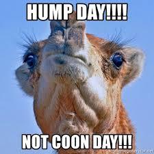 Camel Meme - camel meme generator meme best of the funny meme