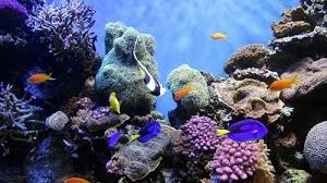 best lighting for corals best led lights for different types of fish tanks complete guide