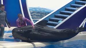 Seaworld Orlando Park Map by Blue Horizons W Pilot Whales Full Show Full Hd Aug 17 2015