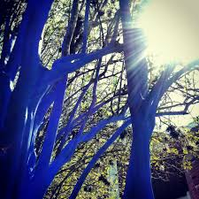 you visited the blue trees at uf yet gainesville cool
