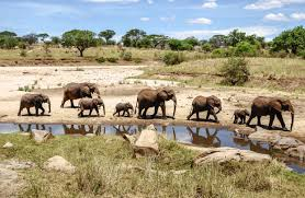 how to take children on an african safari wsj