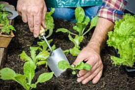 Rock Dust Gardening Gardening Tips Using Rock Dust As A Fertilizer Canamaze Vrp