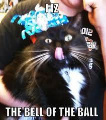 Happy New Year Cat Meme - happy new year hats google search month january holidays