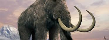 russian scientists laboratory clone woolly mammoth