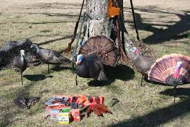Backyard Turkeys Minimalist Turkey Hunting Gun Calls And Decoys Backyard Deer