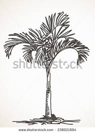 palm tree sketch isolated hand drawn stock vector 238021984
