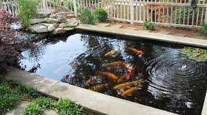 koi ponds essential features of koi pond design u2013 indoor and
