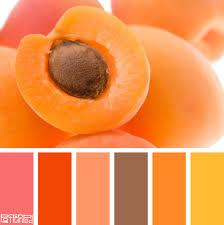 sweet apricot color colorpalettes color pinterest color