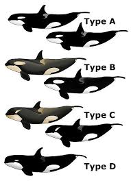 Orca Halloween Costume 252 Love Whales Images Killer Whales Orcas