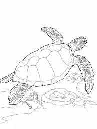 sea turtle loggerhead sea turtle coloring wine