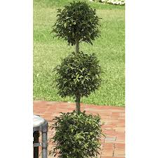 Topiary Plants Online - shop 8 75 gallon eugenia topiary l20938hp at lowes com