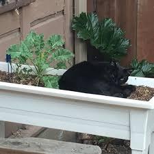 backyardcat hashtag on twitter