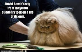 Labyrinth Meme - lolcats labyrinth lol at funny cat memes funny cat pictures