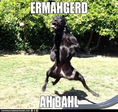 Ermahgerd Animal Memes - i can has cheezburger ermahgerd funny animals online cheezburger