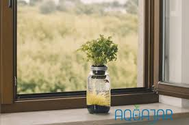 creatively designed mason jar that is a planter and a fish tank at