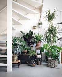 home interior plants 470 best house plants images on plants gardening and pots