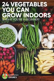 24 newbie friendly vegetables you can easily grow indoors