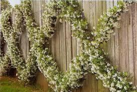 star jasmine on trellis willowbrook park scented terrace garden