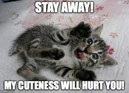 Cute Kitty Memes - cute kitten imgflip