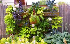 part shade ornamental edible vegetable and herb list coronado