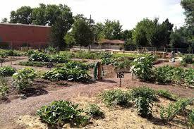 Urban Garden Denver - clayton community garden denver urban gardens