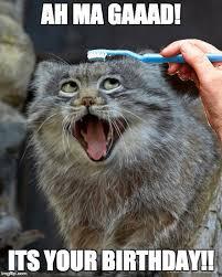 Birthday Meme Cat - best happy birthday cat meme