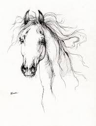 107 draw horse images horse drawings