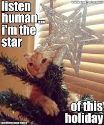 Cat Christmas Tree Meme - these 20 cats in christmas trees will give you life for the win