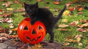 beautiful halloween background desktop backgrounds with halloween cats u2013 halloween wizard