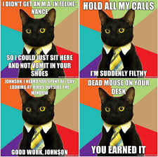 Business Cat Memes - business cat a meme is born broadsheet ie