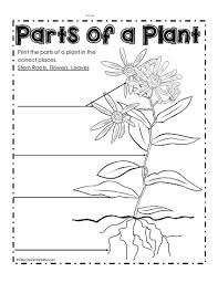 plant parts differentiated instruction tiered worksheets