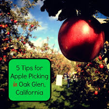 places to go thanksgiving 5 tips for apple picking in oak glen california socal field trips