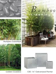 bambus fã r den balkon 69 best bambus images on gardening bamboo ideas and