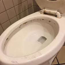 remove black mold from toilet bowl tank and seat