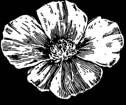 california poppy coloring page 28 images 25 best ideas about