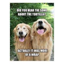 Joke Memes - funny golden retriever tortilla joke meme postcard zazzle com