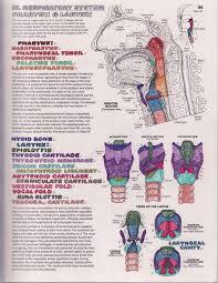 anatomy coloring book pearson vocal anato interest kapit anatomy coloring book at best all