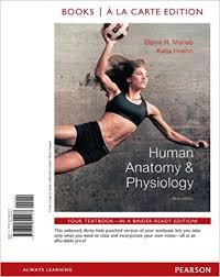 Essentials Of Human Anatomy And Physiology Notes Human Anatomy Physiology Th Edition Notes Human Anatomy