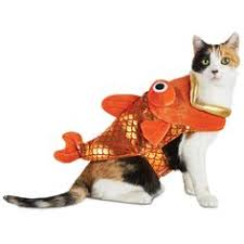 Cat Costumes Halloween 16 Silly Halloween Costumes Pets Halloween Costumes