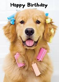 funny golden retriever cards cardfool free postage included