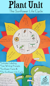 Life Cycle Of A Flowering Plant - free plant life cycle worksheets and activity pack worksheets