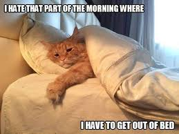 Getting Out Of Bed I U0027m Afraid I U0027ll Get Tired Just Getting Out Of Bed Funny Cats